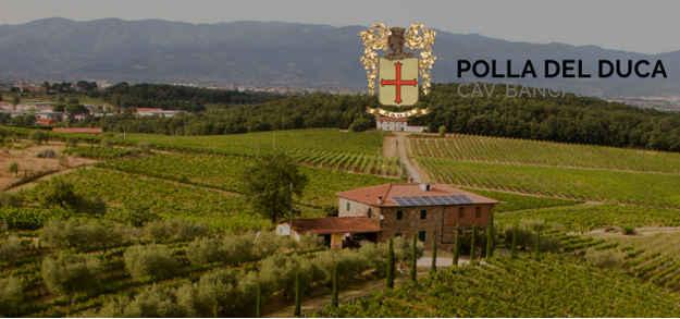 Azienda Agrigola Polla del Duca Cav. Banci