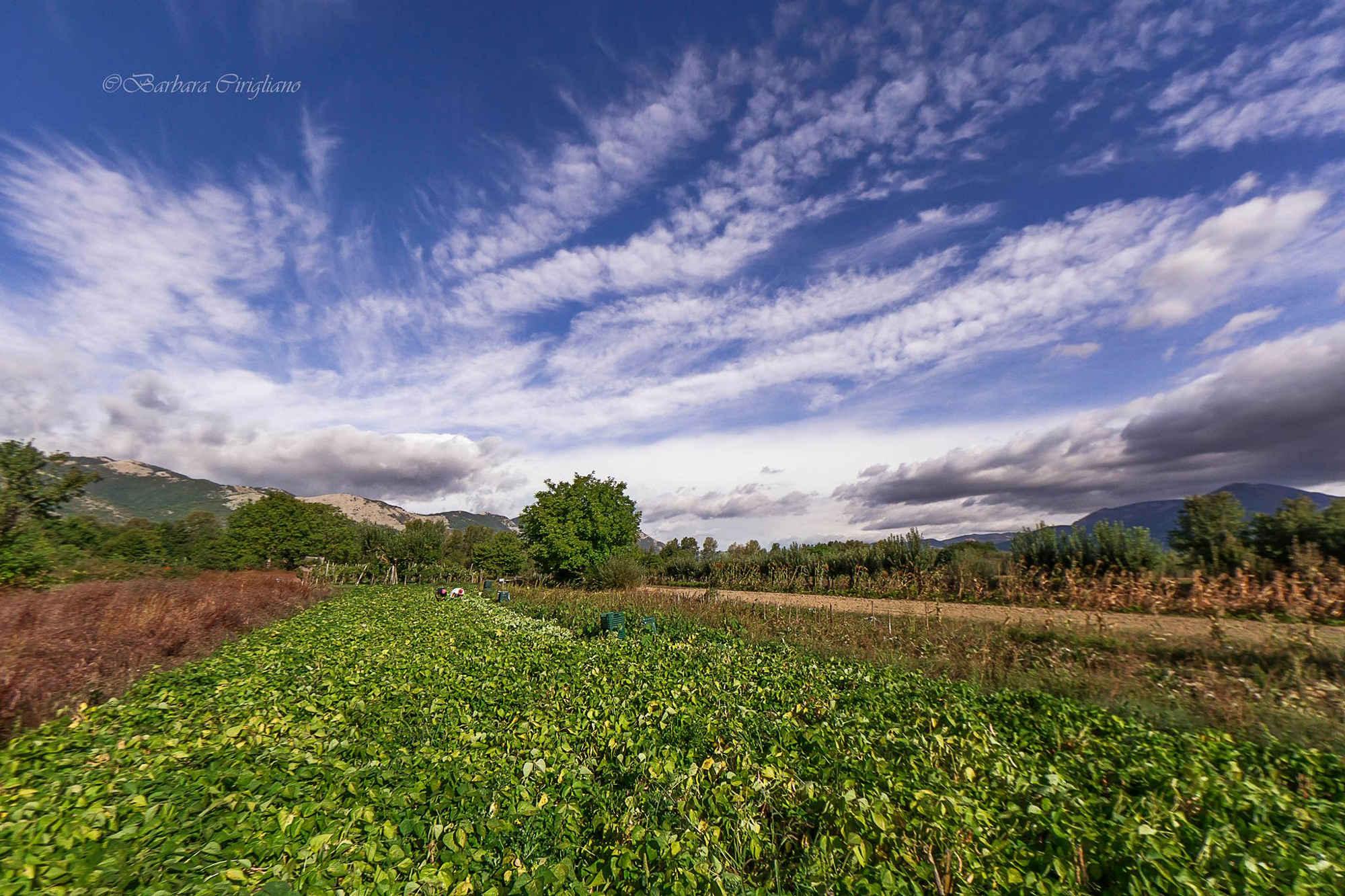 Agricoltura-biologica-02