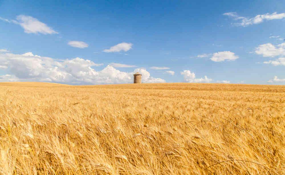 Campo di grano-e-silos-pietragalla