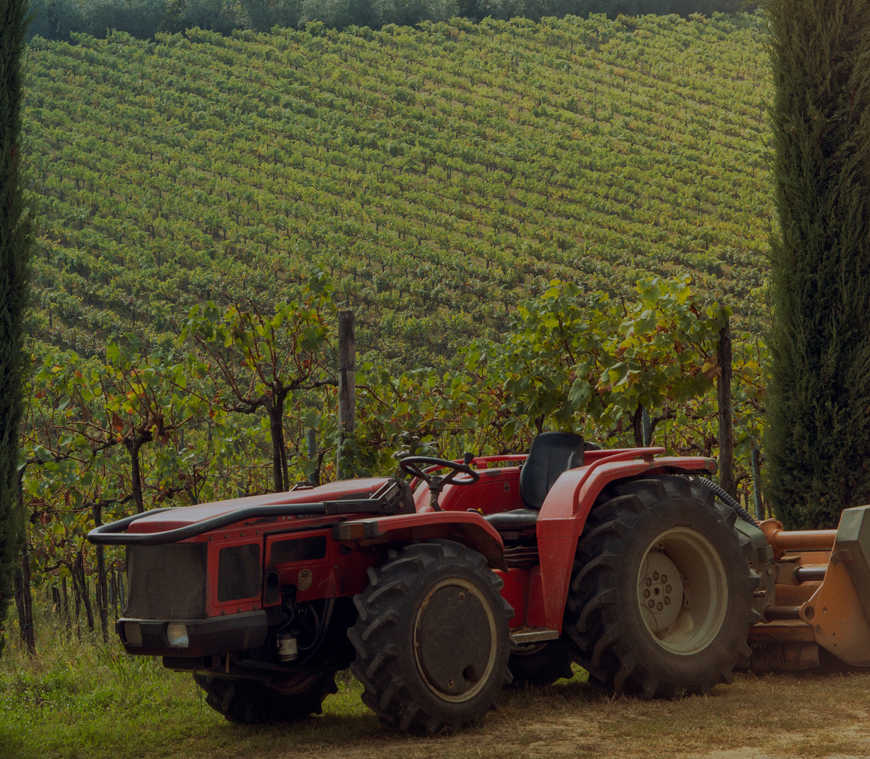 Polla del Duca Azienda agricola Montalbano Quarrata Toscana