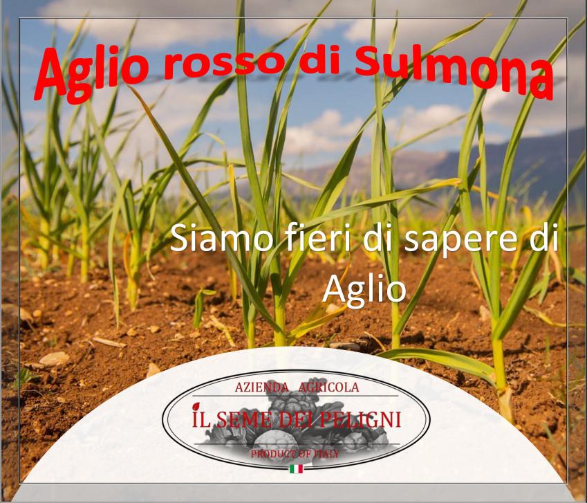 IL SEME PELIGNO specialisti nell' aglio rosso di Sulmona